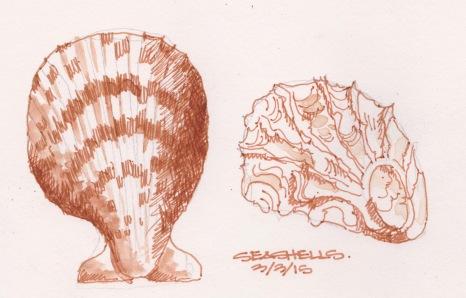 2015-03-03 Seashells