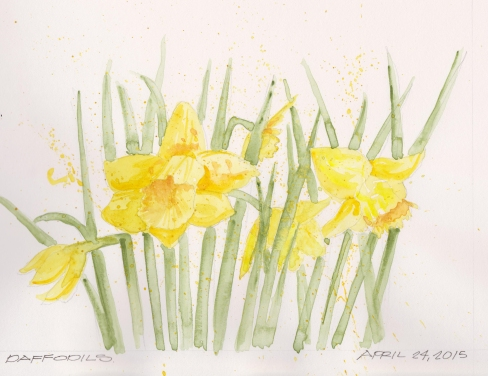 2015-04-24-Daffodils