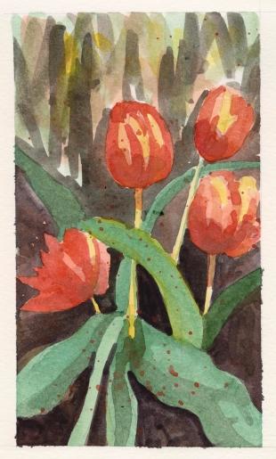 2015-05-18 Tulips