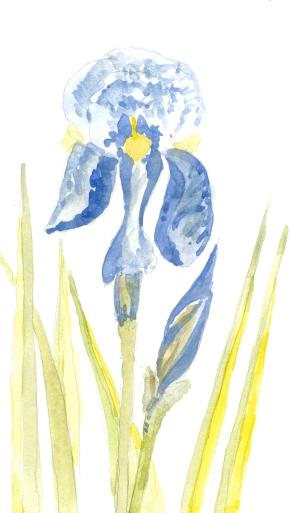 2015-05-31 Iris