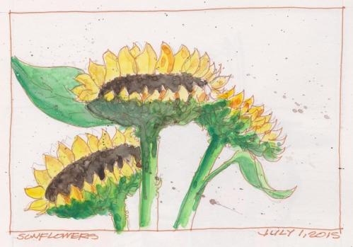 2015-07-01 Sunflowers
