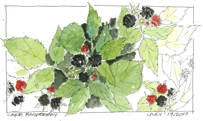 2015-07-19 Raspberry