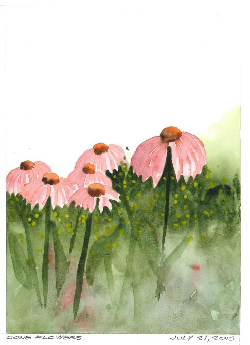 2015-07-21 Cone Flowers