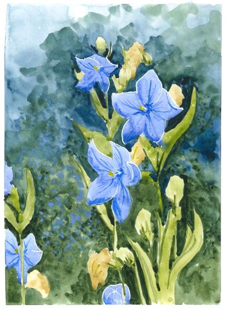 2015-07-26 Blue Flowers
