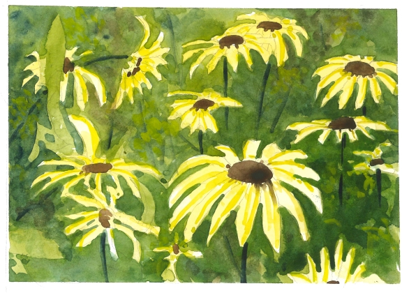 2015-07-29 Black Eyed Susans
