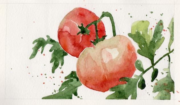 2015-08-17 Tomatoes