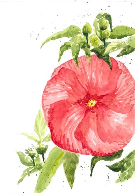 2015-08-20 Hibiscus Flower