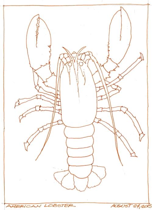 2015-08-24 American Lobster