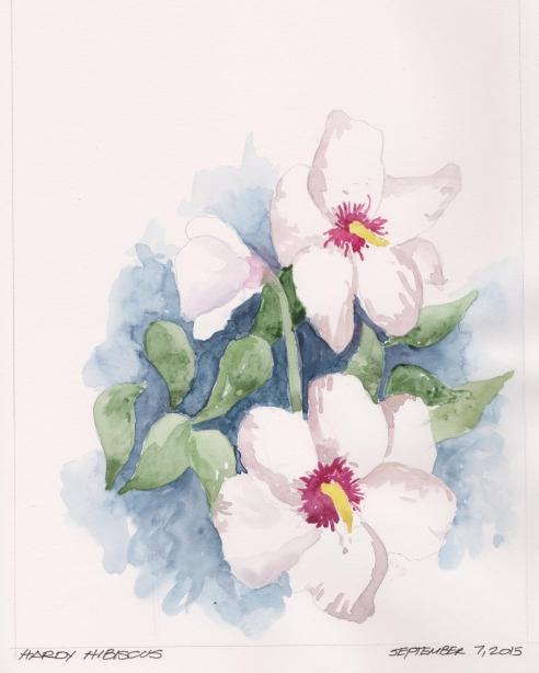 2015-09-07 White Hibiscus