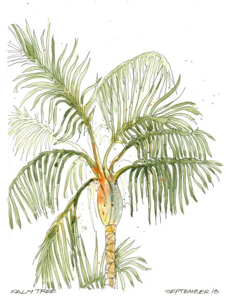 2015-09-18 Plam Tree