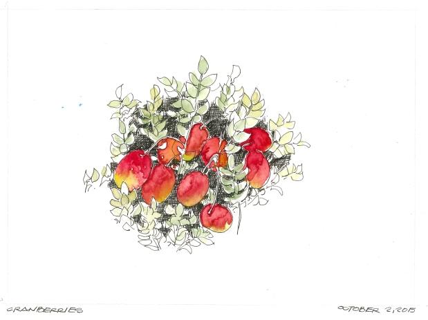 2015-10-02 Cranberries