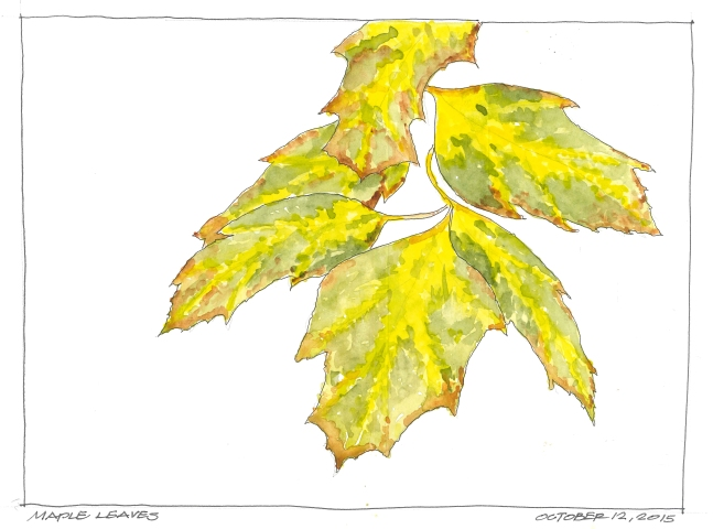 2015-10-12 Maples Leaves