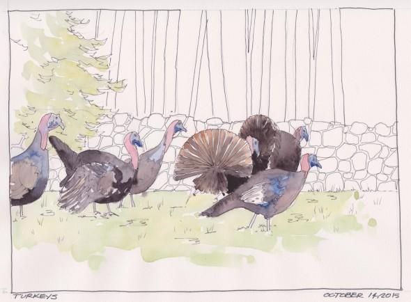 2015-10-14 Turkeys