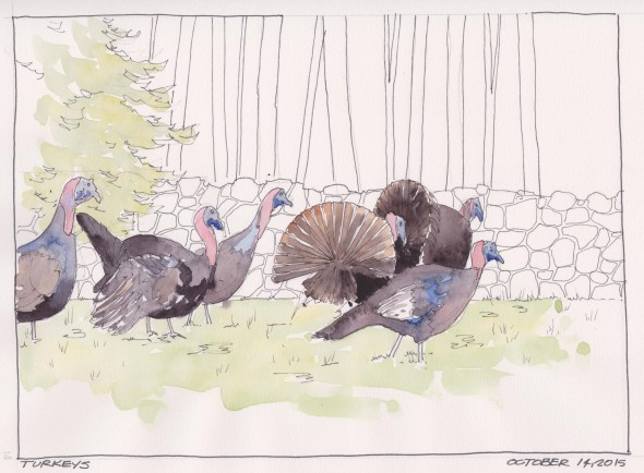 2015-10-14 Turkeys