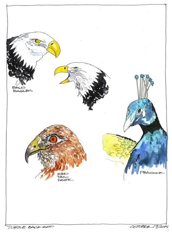 2015-10-19 Zoo Birds