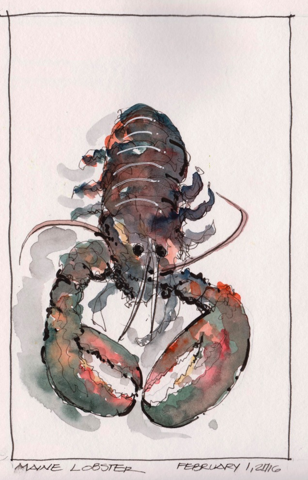 2016-02-01 Maine Lobster