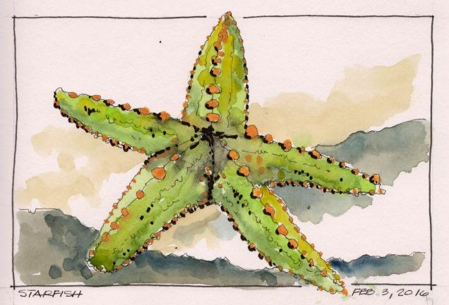 2016-02-03 Starfish