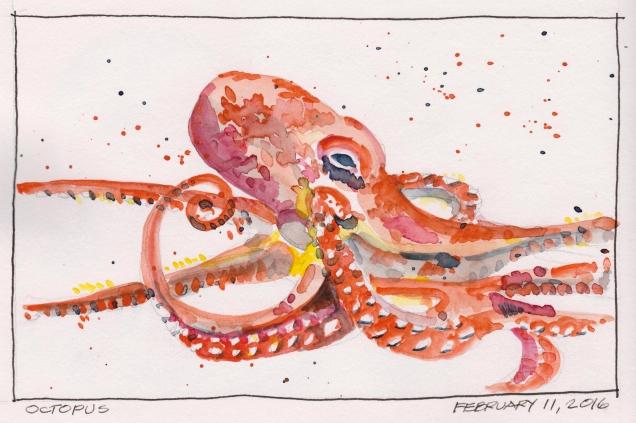 2016-02-11 Octopus