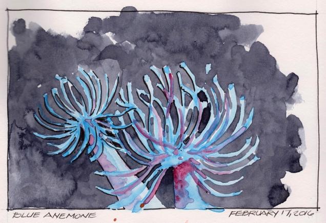 2016-02-17 Blue Anemone