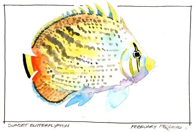 2016-02-19-Sunset Butterflyfish