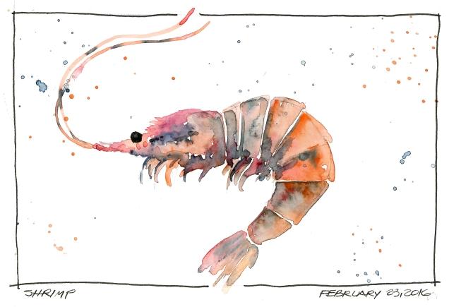 2016-02-23-Shrimp