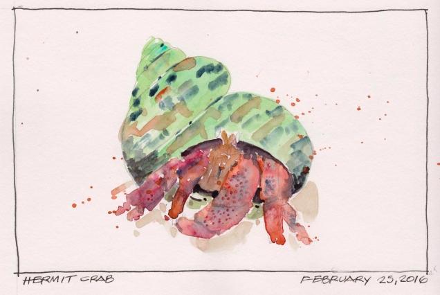 2016-02-25 Hermit Crab