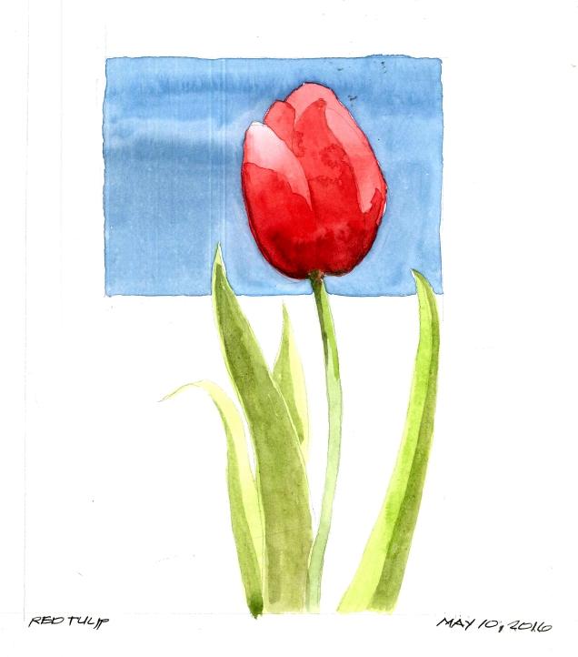 2016-05-10 Red Tulip