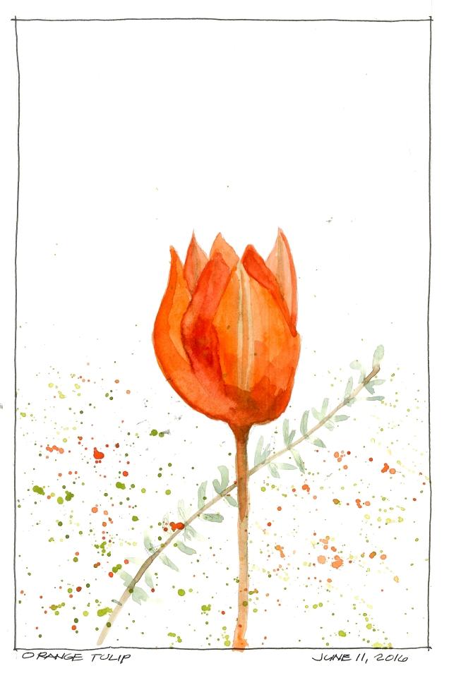 2016-05-11 Orange Tulip