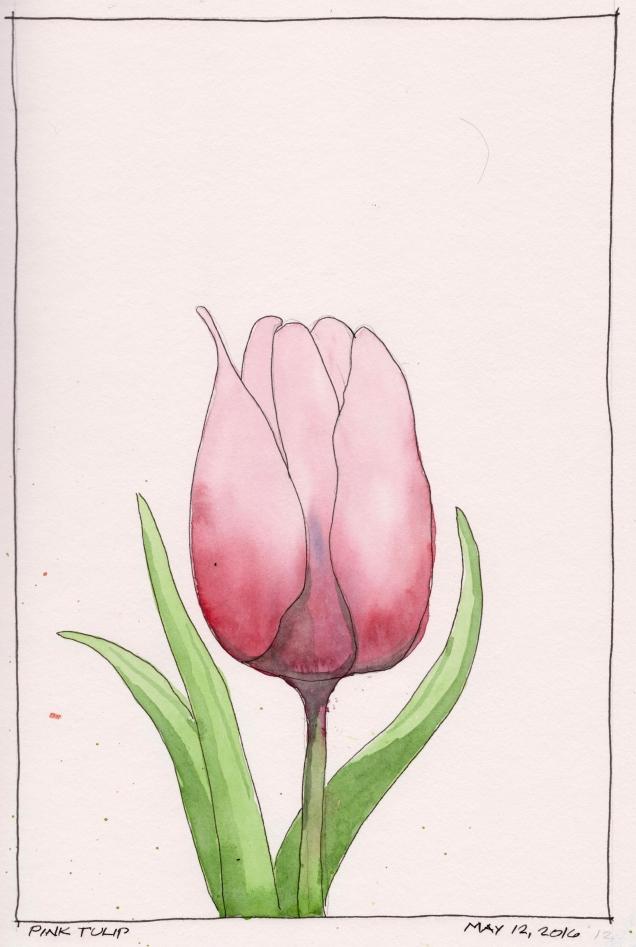2016-05-12 Pink Tulip
