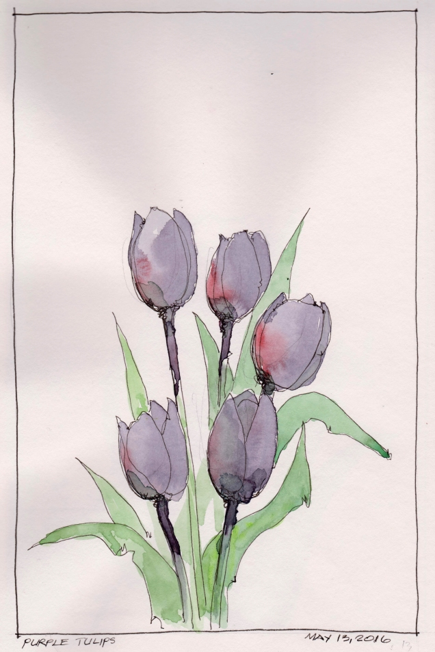 2016-05-13 Purple Tulip