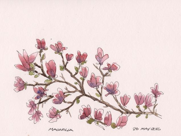 2016-05-23 Magnolia