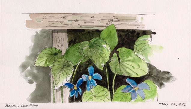 2016-05-24 Blue Flowers