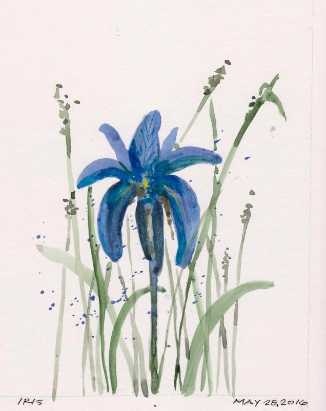 2016-05-28 Iris