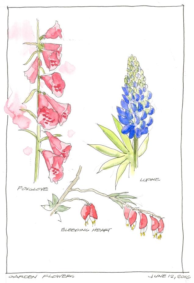2016-06-12 Garden Flowers