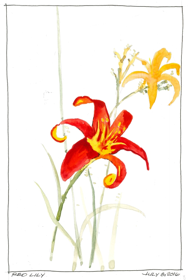 2016-07-08 Red Lily