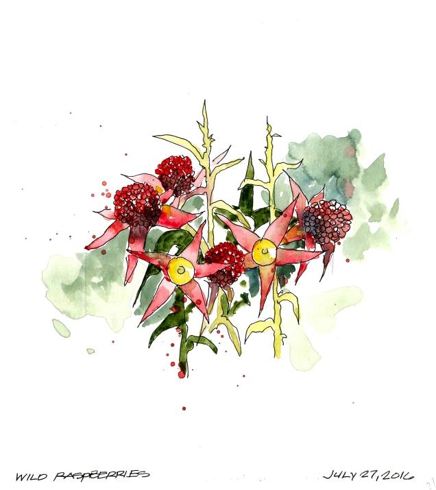 2016-07-27 Raspberries