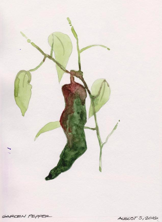 2016-08-05 Garden Pepper