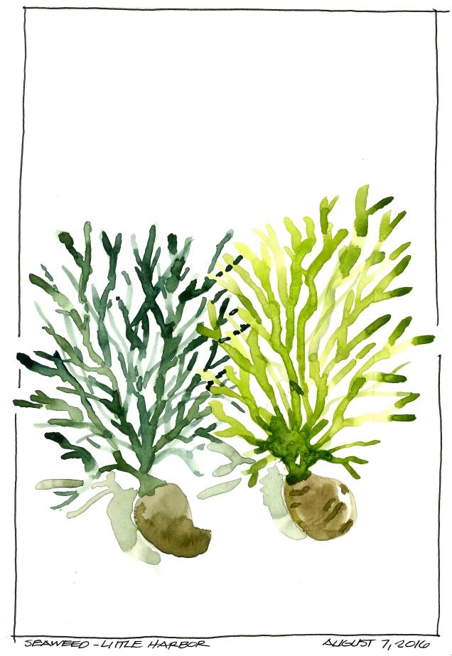 2016-08-07 Seaweed