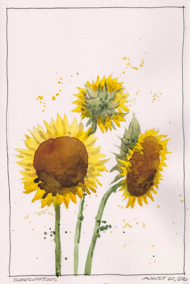 2016-08-20 Sunflowers