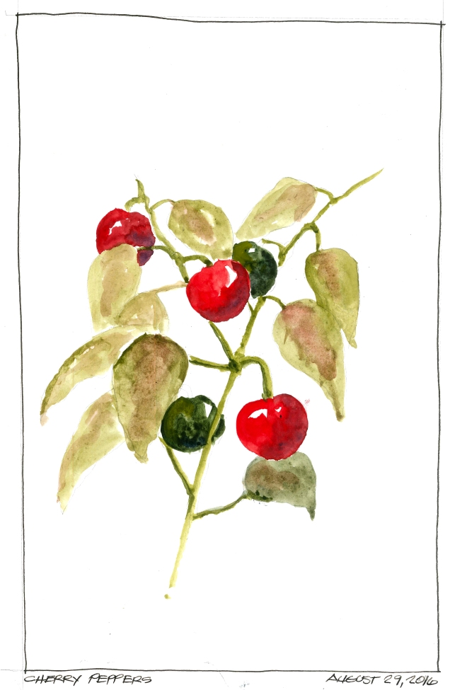 2016-08-29 Cherry Peppers