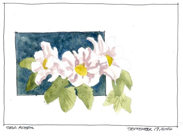 2016-09-19-sea-roses